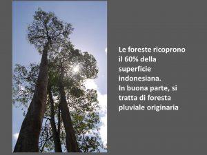 indonesia049