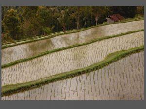 indonesia096