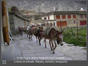 nepal004