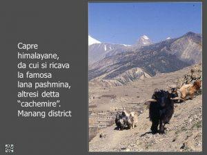 nepal065