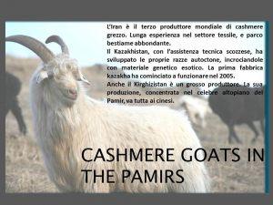 cashemere045